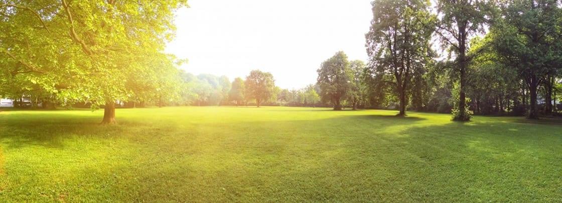 Campo verde, com árvores e iluminado pelo sol